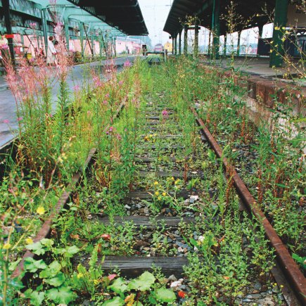 Lois Weinberger, What is beyond plants is at one with them, Documenta X, 1997