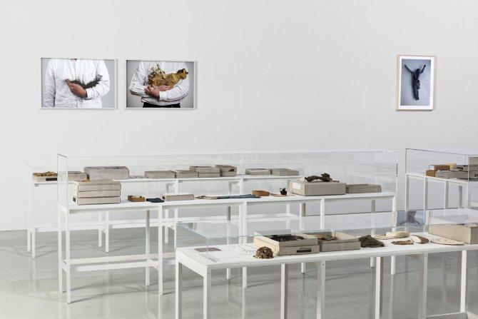 Vue de l'exposition : Lois Weinberger, L'Envers du Paysage au Frac Franche-Comté en 2018